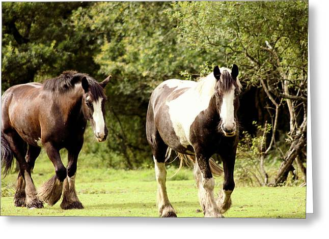 Horses Greeting Card by Frances Lewis