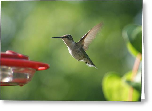 Greeting Card featuring the photograph Hummer by Heidi Poulin