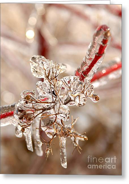 Icy Branches Greeting Card
