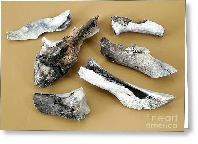 Incinerated Pork Hock Bones Greeting Card