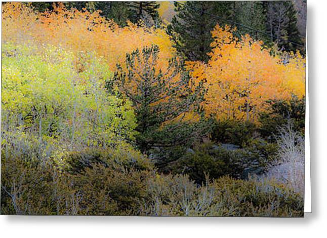 Inyo National Forest Greeting Card