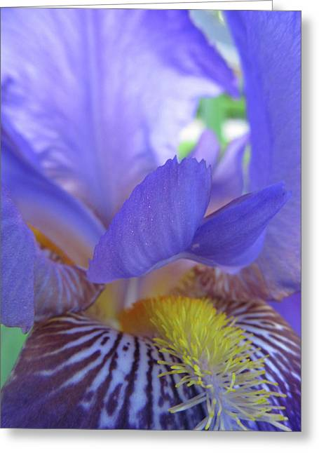 Iris Greeting Card by Michele Caporaso