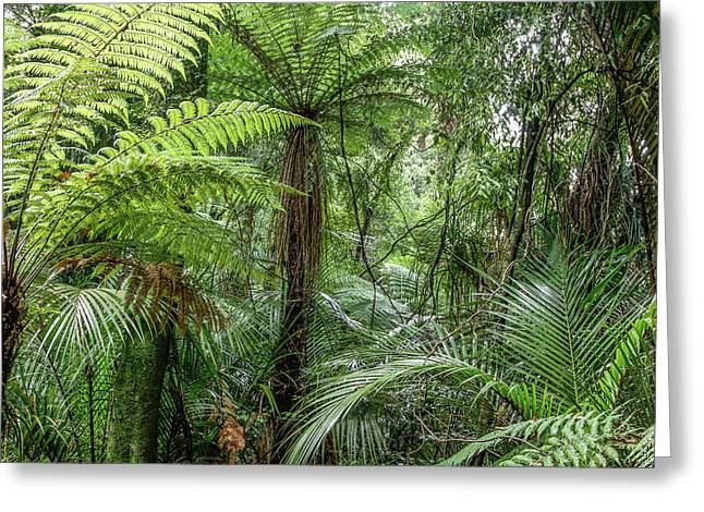 Greeting Card featuring the photograph Jungle Ferns by Les Cunliffe