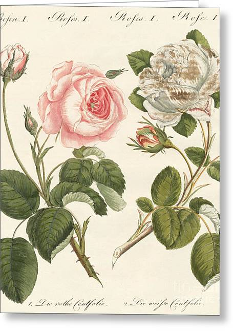 Kinds Of Roses Greeting Card