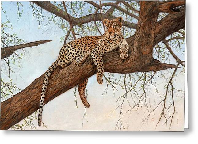 Leopard In Tree Greeting Card by David Stribbling