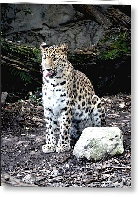 Leopard Greeting Card by Janice Spivey