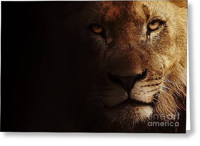 Greeting Card featuring the photograph Lion by Christine Sponchia