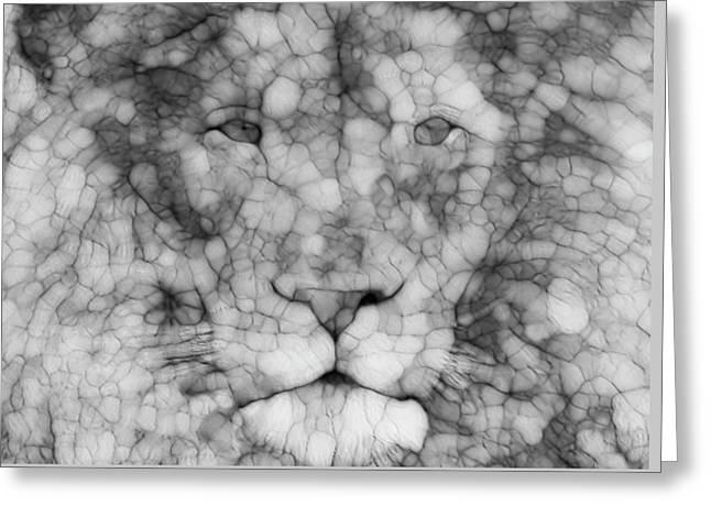 Lion  Greeting Card by Jack Zulli