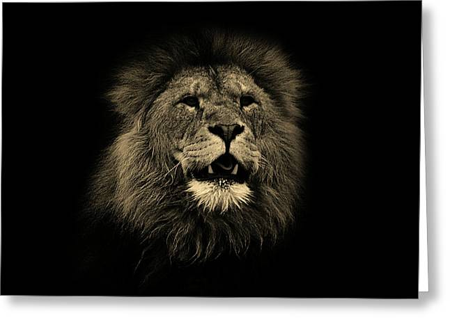 Lions Roar Greeting Card by Martin Newman