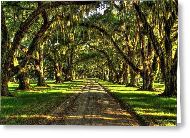 Live Oaks Of Tomotley Plantation South Carolina Low Country Art Greeting Card
