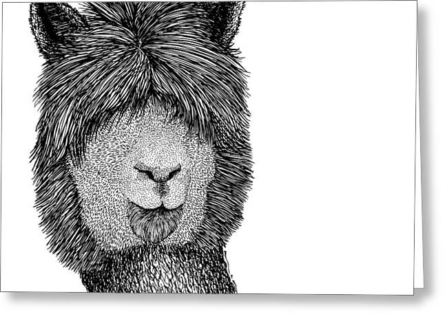 Llama Greeting Card by Karl Addison