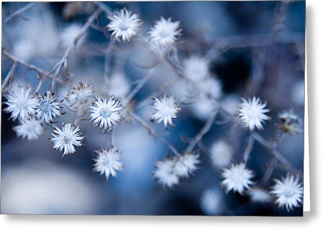 Lonely Winter Greeting Card by Ryan Heffron