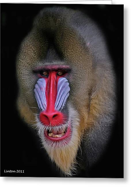 West Africa Greeting Cards - Mandrill Greeting Card by Larry Linton