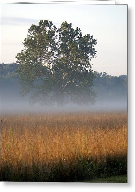 Greeting Card featuring the photograph Morning Mist by Heidi Poulin