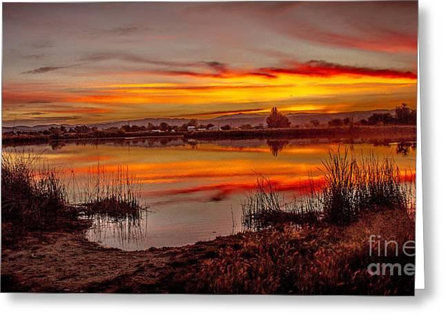 Morning Reflections Greeting Card by Robert Bales