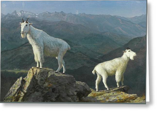 Mountain Goats Greeting Card by Albert Bierstadt