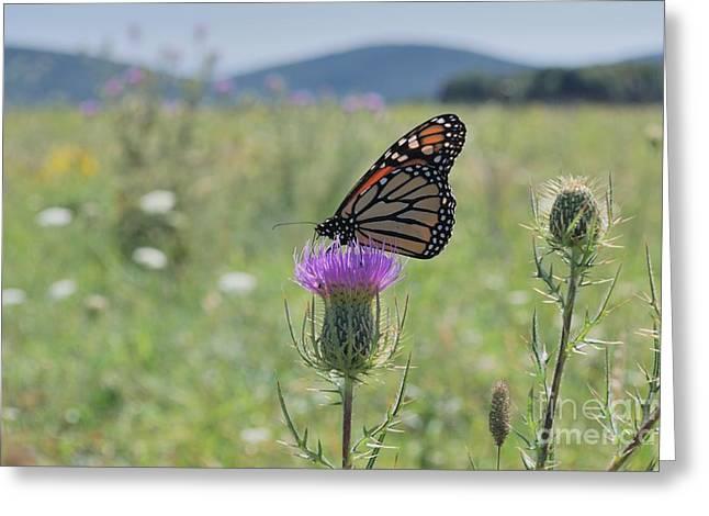 Mountain Meadow Monarch Greeting Card
