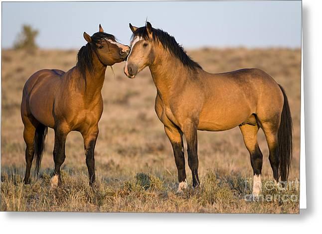 Mustang Stallions Greeting Card by Jean-Louis Klein & Marie-Luce Hubert