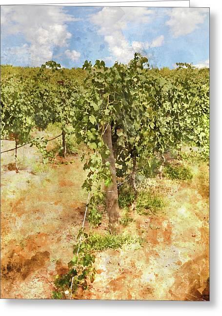 Napa Vineyard In The Spring Greeting Card