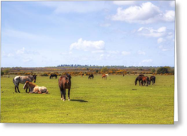 New Forest - Hampshire - Uk Greeting Card by Joana Kruse