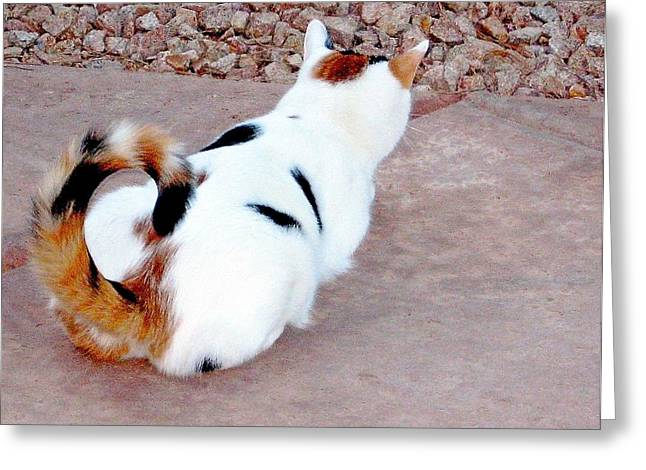 Silly Calico Kitty Greeting Card