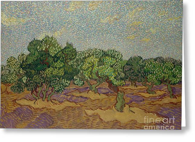 Olive Trees, 1889 Greeting Card by Vincent Van Gogh