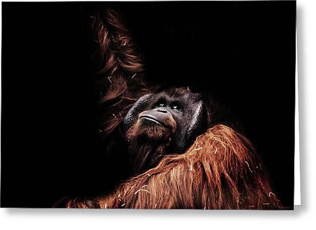 Orangutan Greeting Card by Martin Newman