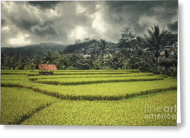 Greeting Card featuring the photograph Paddy Field by Charuhas Images