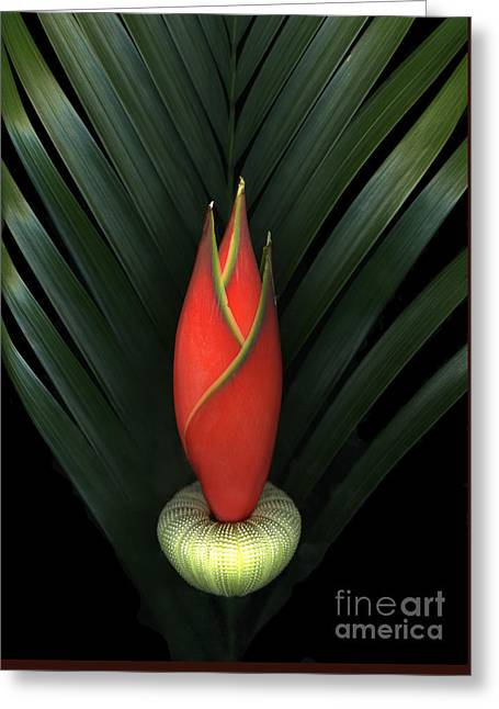Palm Of Fire Greeting Card