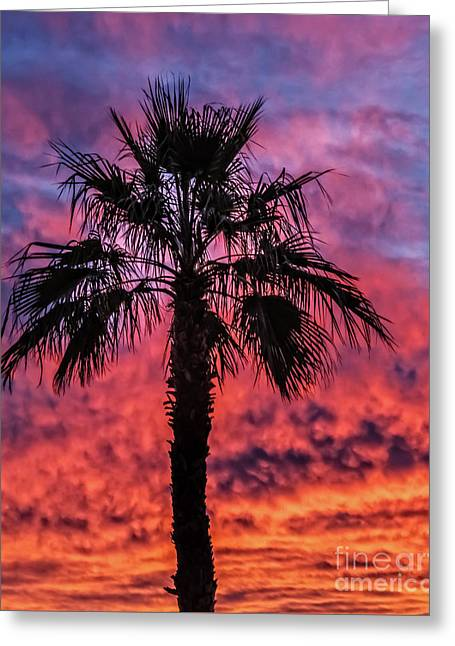 Greeting Card featuring the photograph Palm Tree Silhouette by Robert Bales