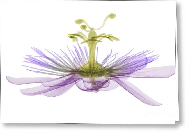 Passion Flower, X-ray Greeting Card