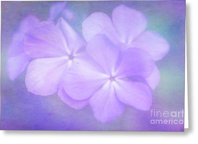 Phlox In The Evening Light Greeting Card