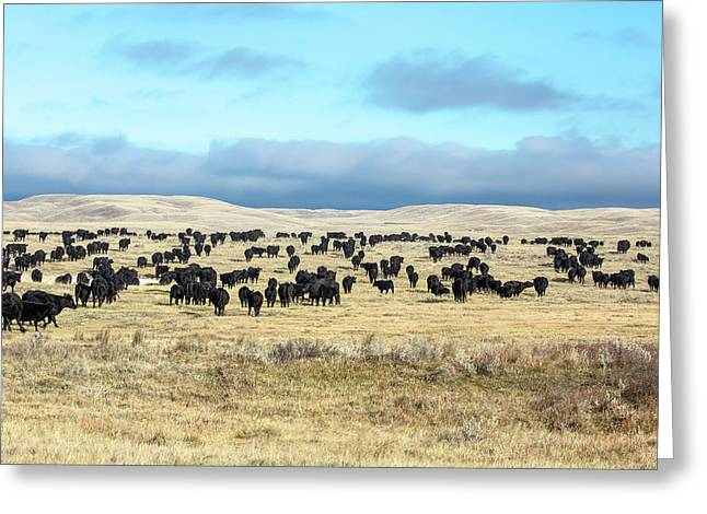 A Herd Gathers Greeting Card