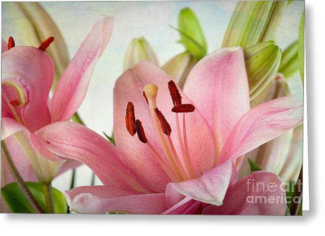 Pink Lilies Greeting Card by Nailia Schwarz