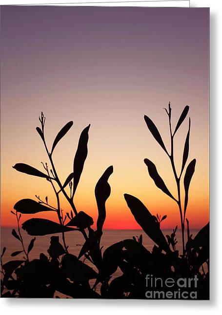 Plants On Sunset Greeting Card by Carlos Caetano
