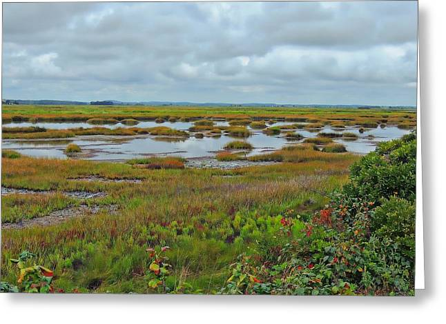 Plum Island Greeting Card by Marcia Lee Jones