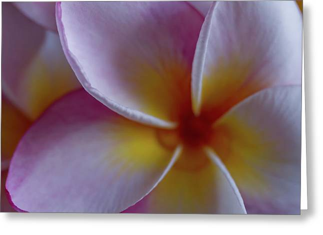 Plumeria Greeting Card by Roger Mullenhour