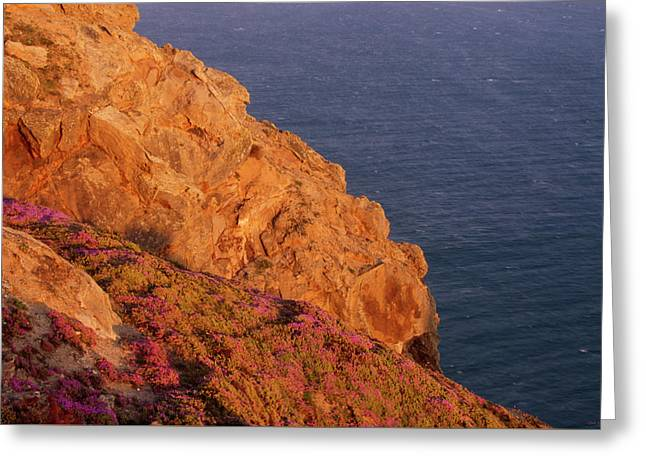 Point Reyes National Seashore Greeting Card by Soli Deo Gloria Wilderness And Wildlife Photography