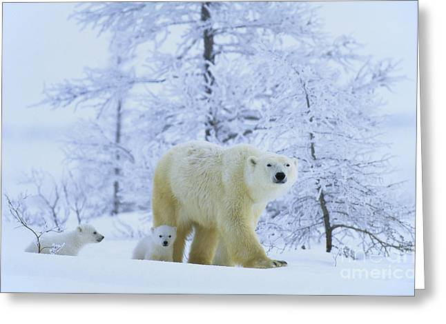 Polar Bear And Cubs Greeting Card by Jean-Louis Klein & Marie-Luce Hubert