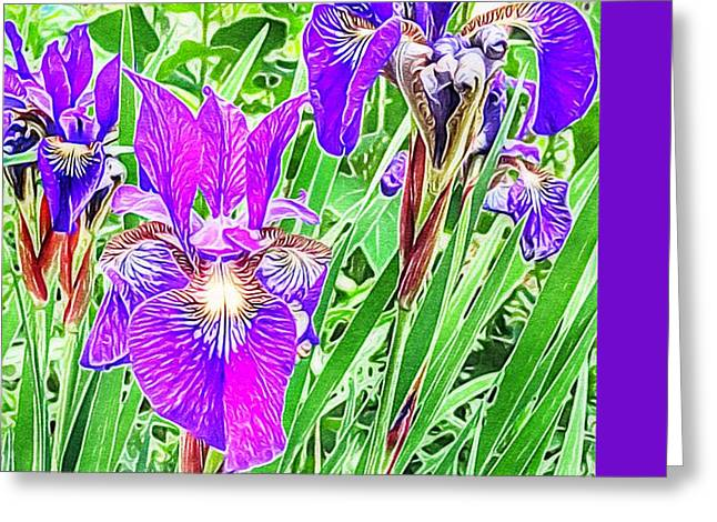 Purple Irises Greeting Card by Anne Sands