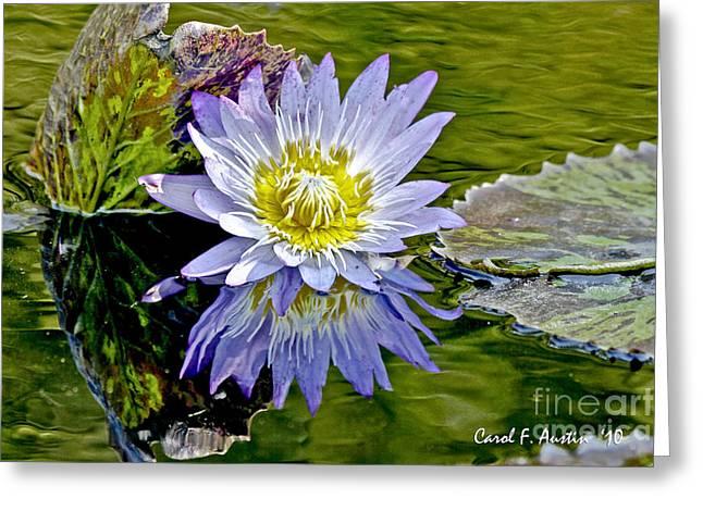 Purple Water Lily Pond Greeting Card by Carol F Austin