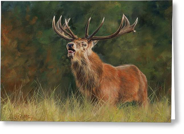 Red Deer Stag Greeting Card by David Stribbling