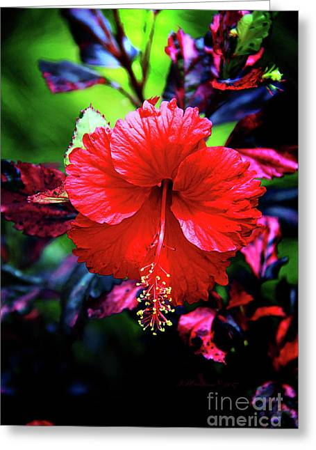 Red Hibiscus 2 Greeting Card by Inspirational Photo Creations Audrey Woods