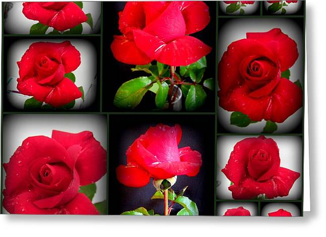 Red Rose Greeting Card by Joyce Woodhouse