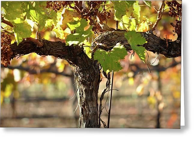 Red Wine Vine Greeting Card