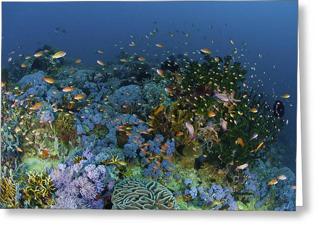 Ocean Habitat Greeting Cards - Reef Scene With Coral And Fish Greeting Card by Mathieu Meur