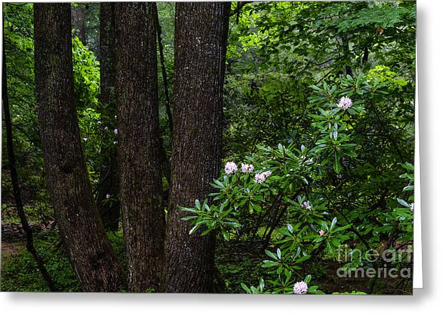 Rhododendron Forest Greeting Card by Thomas R Fletcher