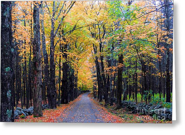 Road Through Woods Greeting Card by Larry Landolfi
