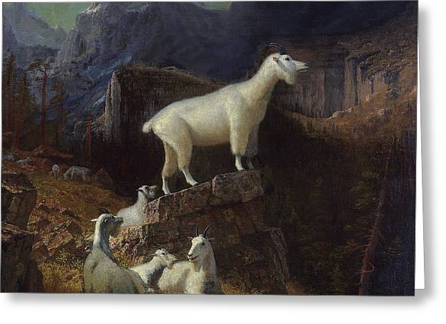 Rocky Mountain Goats Greeting Card by Celestial Images