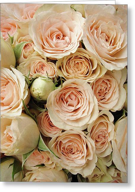 Rose Blush Greeting Card by Jessica Jenney